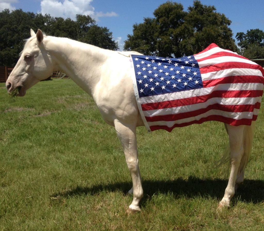 rr horse